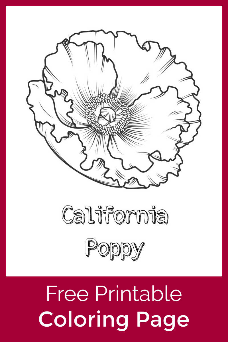 Download this California poppy coloring page, so that your child can color this beautiful flower that appears in the Spring and Summer.