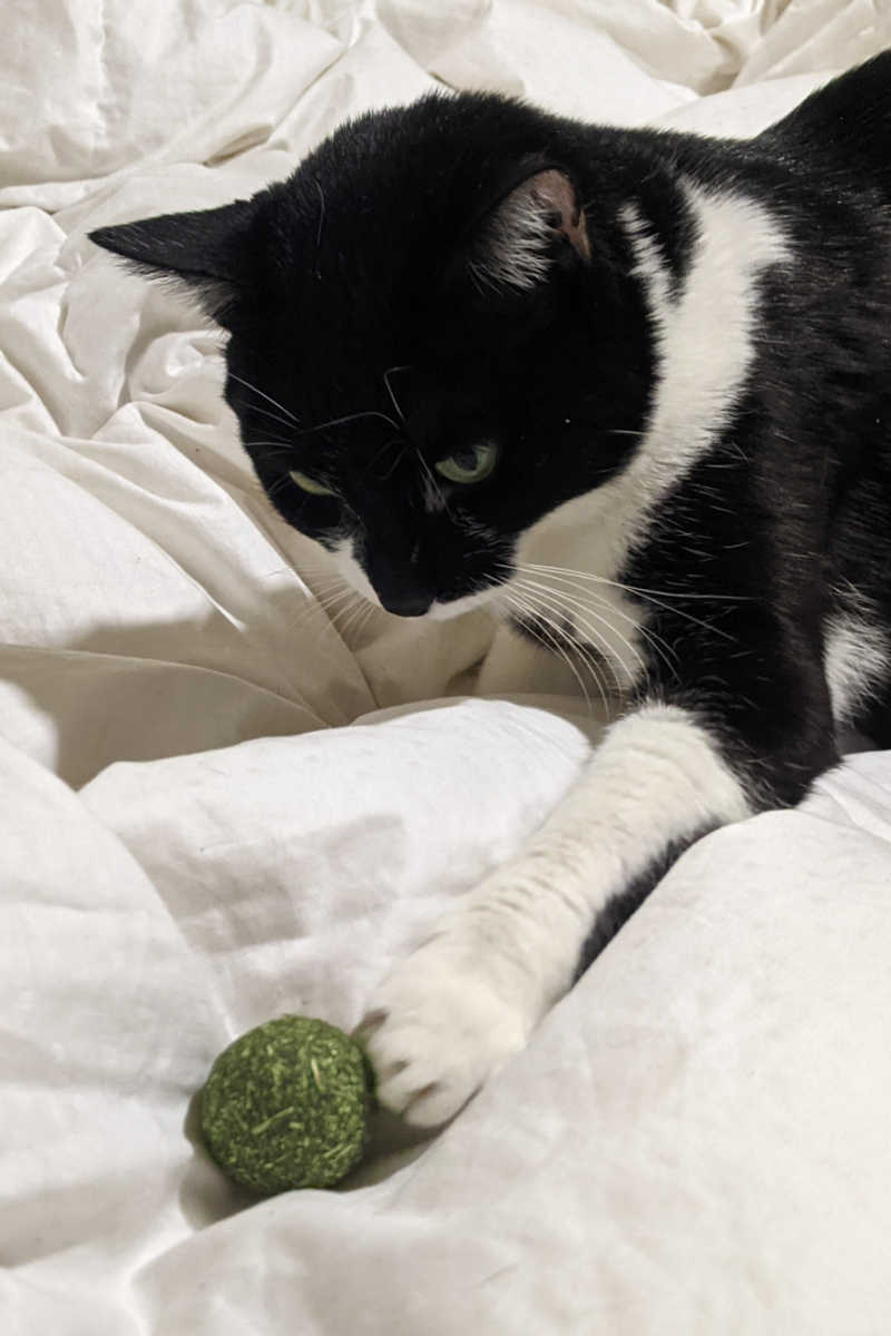 My cats have been having so much fun, since we got all natural Raw Paws compressed catnip balls for them to play with.