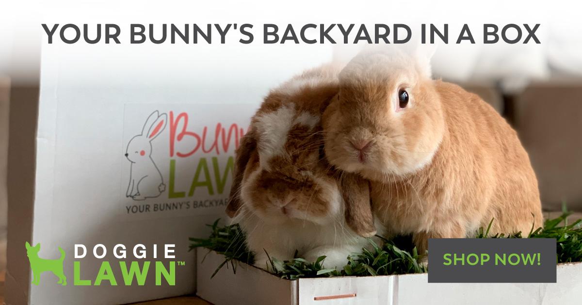 backyard in a box bunny care 101