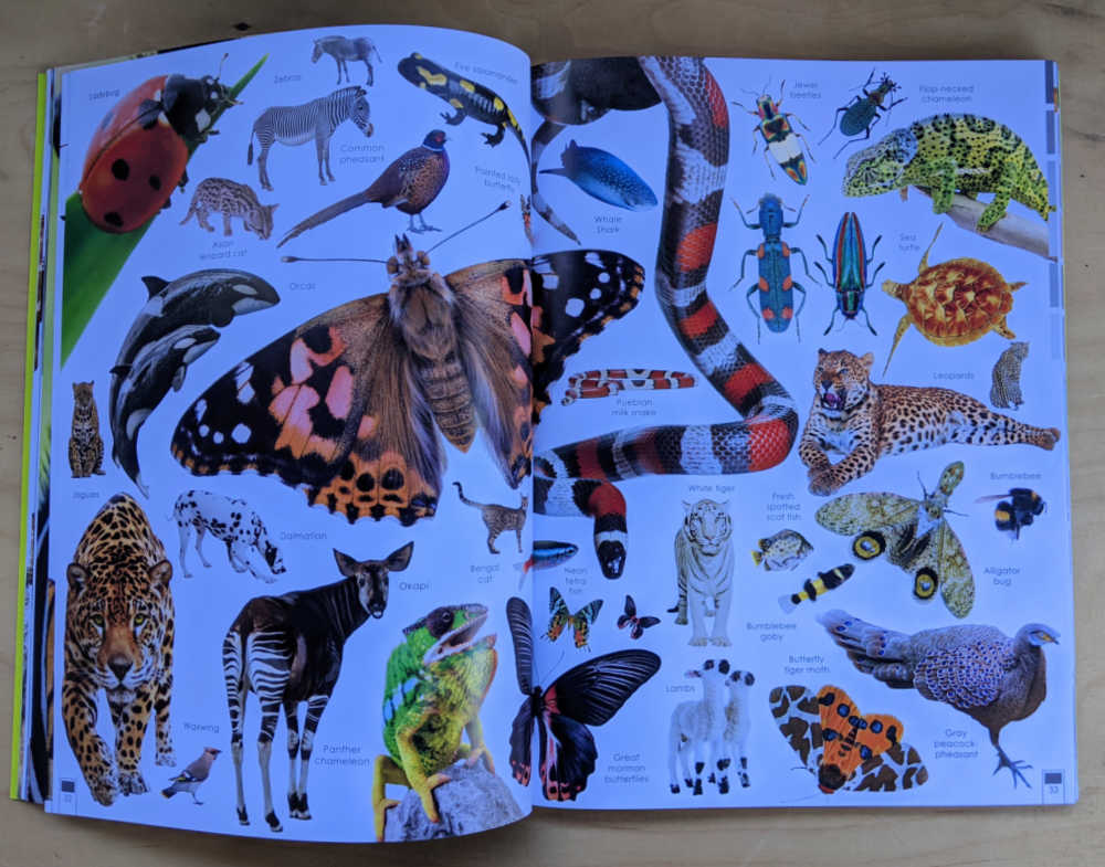 butterflies snakes insects animal pictures in book.