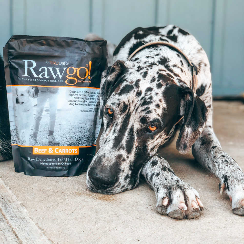 black and white dog with raw food