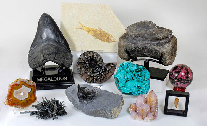 fossils for shark week