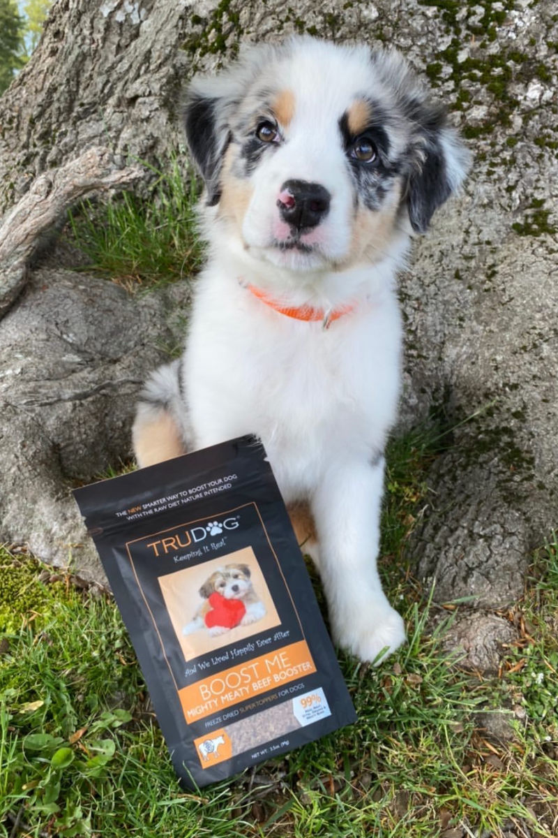 Celebrate RAWgust for dogs by trying out a raw food diet this month, so you can see the benefits of natural raw dog food and treats.
