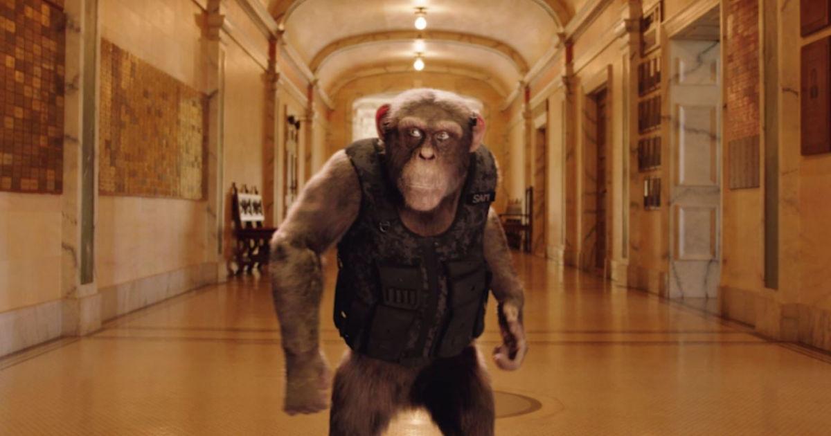secret agent ape in hallway