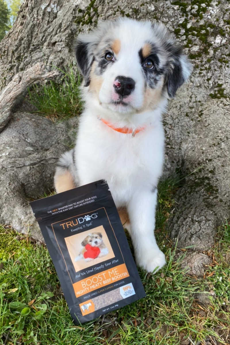 Boost your pet's nutrition, when you add raw freeze-dried dog food toppers to their meals. Your fur baby will love the taste and the healthy benefits.